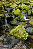 Lush moss covered rocks and a stream. Royalty Free Stock Images