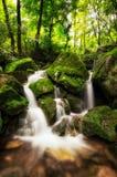 Lush mossy creek Royalty Free Stock Image