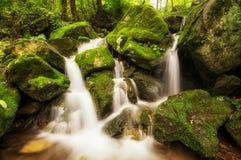 Lush mossy creek. Side after the rain. Taken in Wanju, South Korea Royalty Free Stock Image