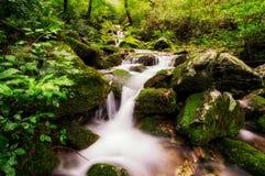 Lush mossy creek Royalty Free Stock Photo