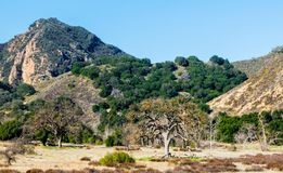 Lush mountain peak and hillside in California. Lush mountain peak and hillside with green trees and vegetation in the Santa Monica Mountains at Malibu Stock Photo