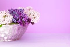 Lush multicolored bouquet of lilac flowers in a blurred purple background. Pastel greeting card concept. Copy space. royalty free stock photo