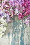 Lush multicolored bunches of lilac Royalty Free Stock Photos