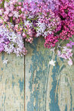 Lush multicolored bunches of lilac Royalty Free Stock Photo