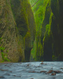 Lush narrow canyon. Narrow lush canyon filled with water.  Lush green plants drape from the cliffs Stock Images