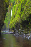 Lush narrow canyon waterfall Stock Photography