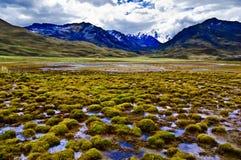 Lush natural landscape Stock Photography