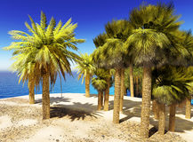 Lush oasis landscape on desert Royalty Free Stock Photo