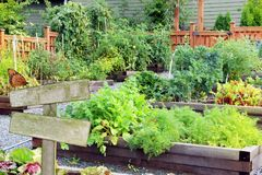 Vegetable and herb garden. Royalty Free Stock Images
