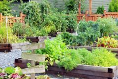 Vegetable and herb garden. Lush and organic community vegetable, fruit and herb garden in summer with a blank wooden sign. Add your own text stock photos