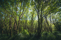 Lush overgrown forest. Image of a lush overgrown forest Stock Photography