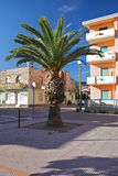 Lush palm tree on a sunny day at Bosa Marina, Sardinia, Italy Stock Images