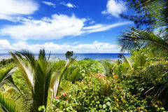 Lush palm trees on a tropical island. On a sunny day royalty free stock image