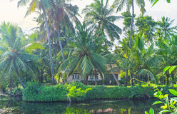 The lush palms at the Hamilton`s Canal, Sri Lanka. The scenic green palms provide the shade to the villlage on the bank of Hamilton`s Canal, Wattala suburb Stock Image