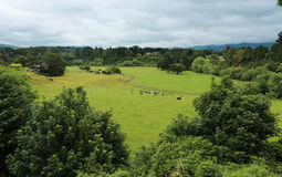 Lush Pasture. Rich green farmland in a valley Stock Image