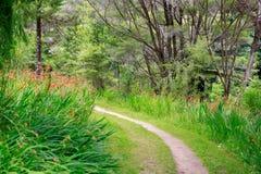 Lush path with beautiful orange flowers. Stock Photos