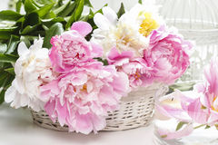 Lush peonies in white basket. Festive decoration Royalty Free Stock Photography