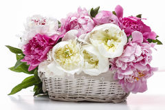 Lush peonies in white basket Stock Photo