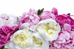Lush peonies in white basket Stock Image