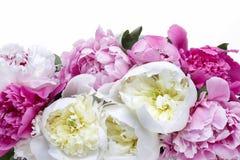 Lush peonies in white basket. Spring flowers decoration Stock Image