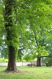 Lush Picnic Area Features Large Beautiful Trees royalty free stock images