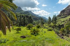Lush plain in the valley on Gran Canaria. Lush plain in the valley with many trees on Gran Canaria Stock Photo