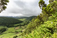 Lush Plants in the Azores. Lush plants on the rim of the Sete Cidades caldera in the Azores island of Sao Miguel stock photo