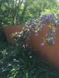 Lush garden escape. Lush plants in the suburban garden, Virginia Beach Virginia USA Royalty Free Stock Photography