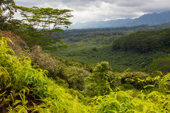 Lush pristine tropical forest stock photo