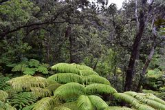 Lush rain forest in Hawaii royalty free stock image