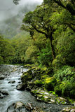 Lush rainforest Royalty Free Stock Photos