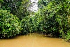 Rainforest along the kinabatangan river, Sabah, Borneo. Malaysi. A royalty free stock image