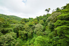 Lush rainforest canopy Monteverde Costa Rica. Lush trees rainforest canopy Monteverde Costa Rica Royalty Free Stock Image