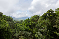 Lush rainforest canopy view. At La Fortuna Costa Rica Stock Photos