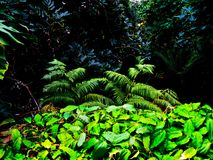 Lush Rainforest. Lush foliage in a tropical rainforest Stock Images