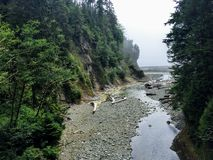 A lush remote canyon along the west coast trail on Vancouver Island, British Columbia, Canada. stock photo