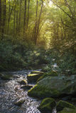 Lush river in forest Stock Photo