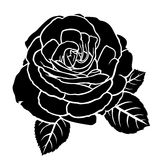 Lush roses flower Royalty Free Stock Images