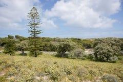 Lush Rottnest Landscape Stock Photo