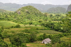 The lush scenery of Vinales, Cuba Royalty Free Stock Photos