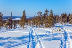In the lush snow ski trails. New Year`s sunny winter day in a snowy forest. In the lush snow ski trails. Christmas in Lapland. The concept of exotic and extreme Royalty Free Stock Images