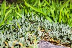 Lush spring vegetation near the gray stone Royalty Free Stock Image