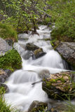 Lush Stream. Blurred rushing water down a lush stream Royalty Free Stock Photography