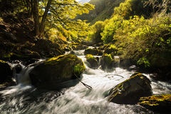 Lush stream in forest Stock Photos