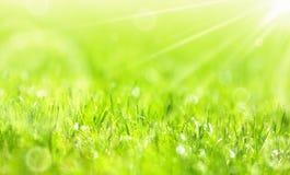 Lush summer green grass Stock Photography