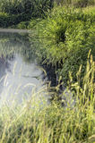 Lush summer green grass near water Royalty Free Stock Photos