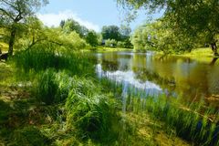 Lush summer vegetation by a pond. With the sun shining through the branches of the trees Stock Image
