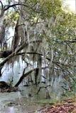 Charleston Wilderness Swamp stock images