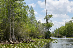 Lush swamp waterway and hanging everglade trees. A fishing boat on a swamp waterway edged by hanging everglade trees, lily pads and lush forest vegetation Stock Image