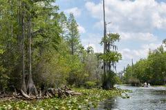 Lush swamp waterway and hanging everglade trees Stock Image